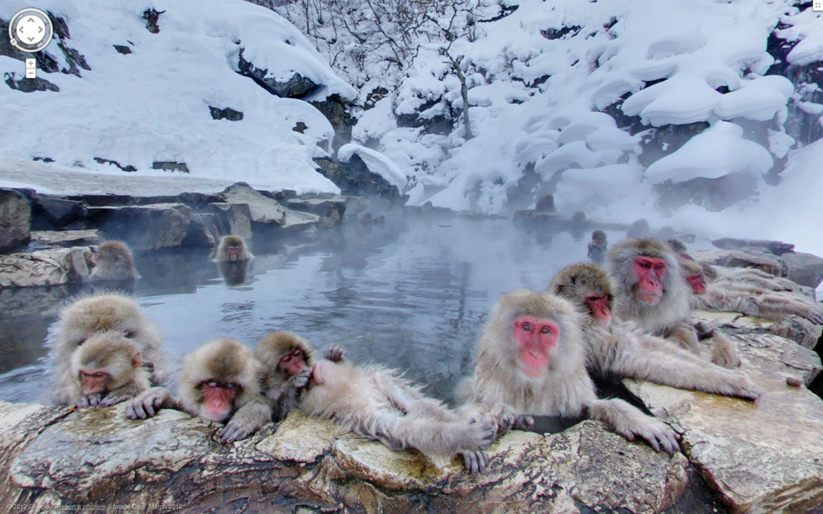 Jigokudani-Monkey-Park-Japan-in-winter-azbooking