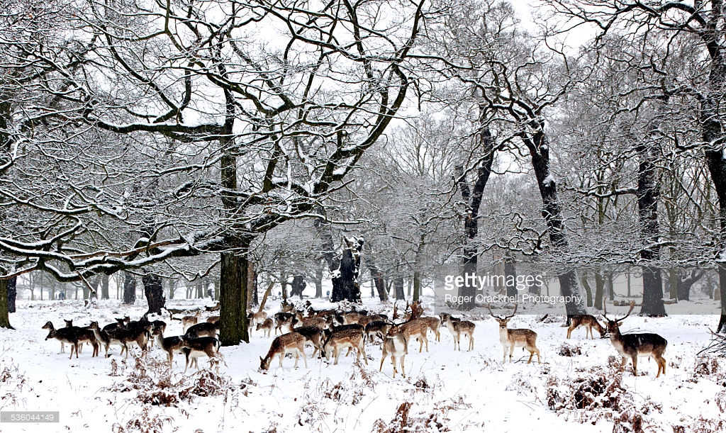 Richmond-Park-usa-winter-azbooking